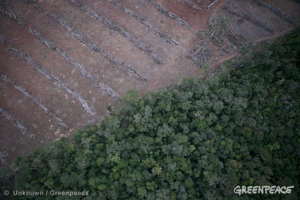 Forêt pluviale rasée