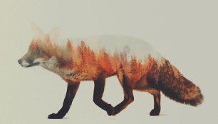 Norvegian Woods par Andreas Lie
