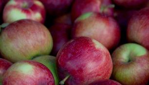 Pommes sans gaspillage